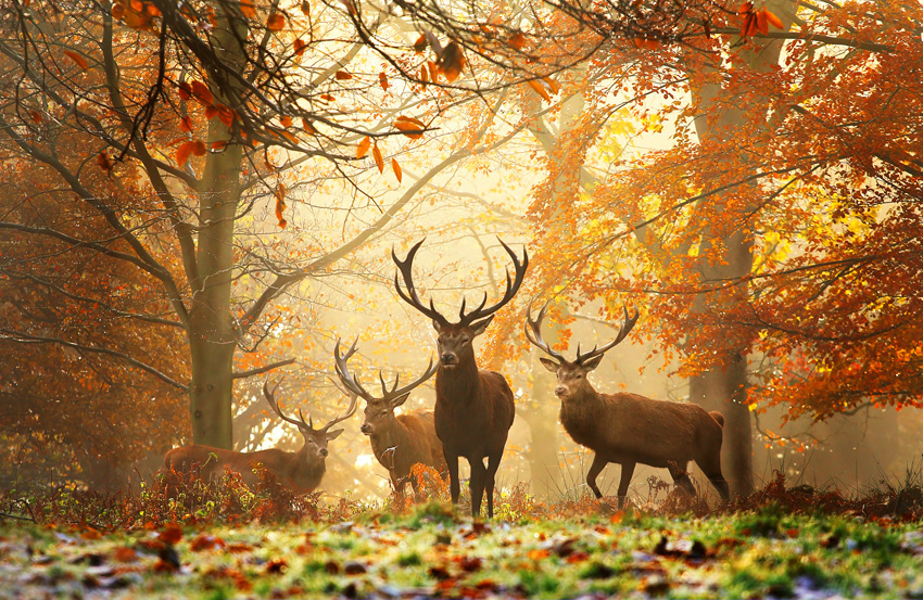 Realm of the Deer